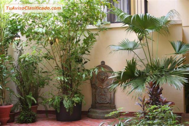 Mantenimiento de jardines y podas de baja y alta jard n y vivero - Mantenimiento de jardines ...