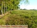 Piñero: Ruta AO12 km 9,5 (Entre Ruta Provincial 18 y Ruta Provincial 14) 2 lotes linderos