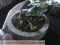 Paisaje en maceta de cemento 5 plantas