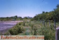 Santiago del Estero: Pinto - Colonia Agricola Aschpa Suiaska Ruta Nacional 34 Campo 67 has