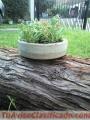 Macetas de cemento gris con plantines