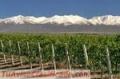 Bodega de vinos en Mza. Lujan de Cuyo con 77hta.intermediario.