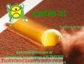 Academia de Tenis, Tenis Tec