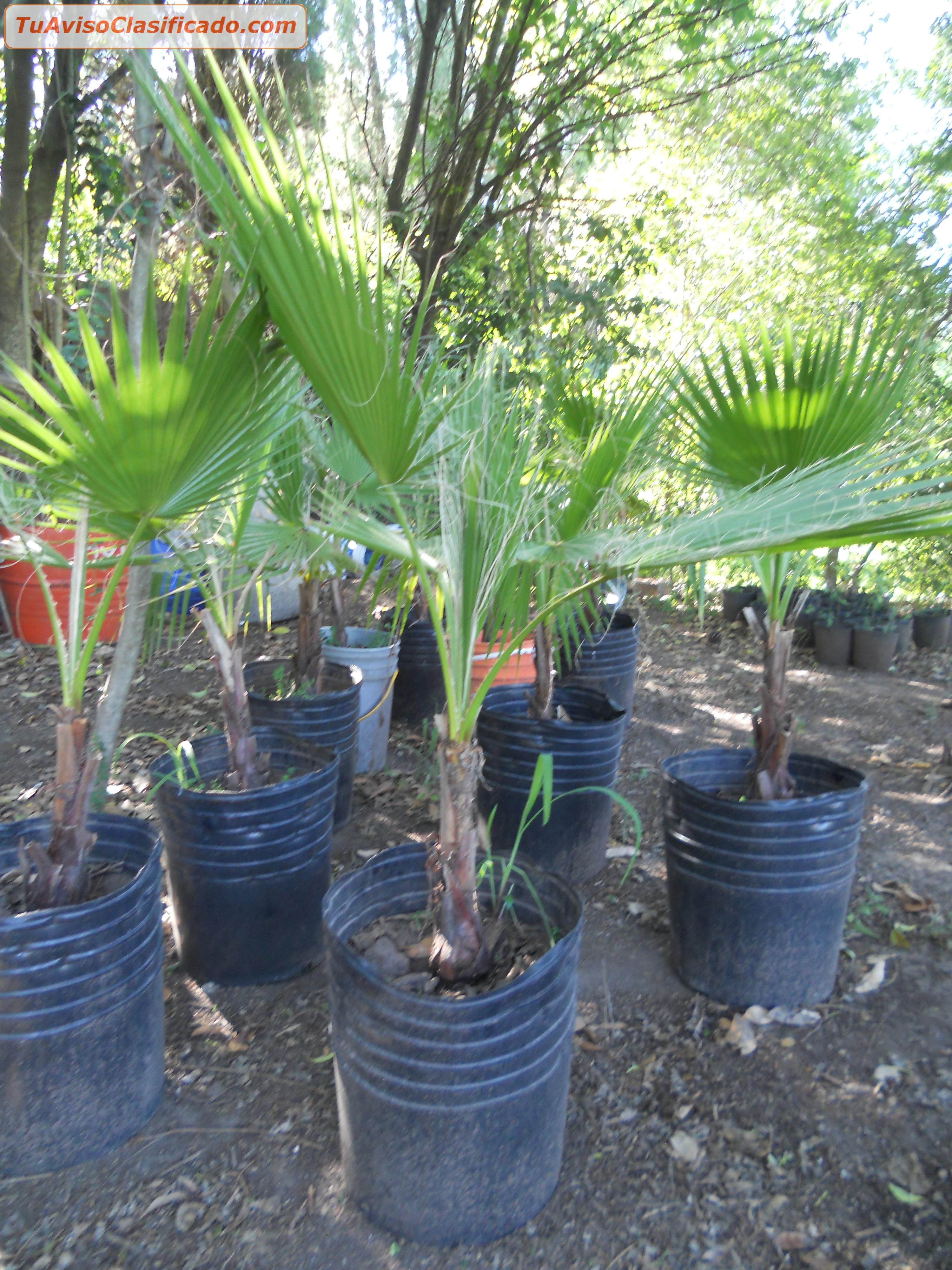 Plantas y semillas de jard n y viveros en for Vivero casa jardin